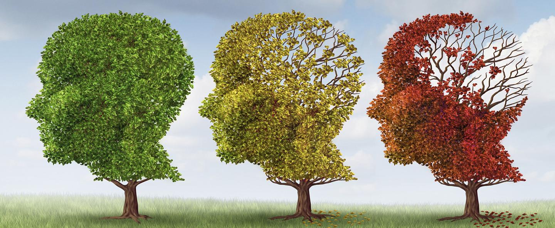 Memoria: un aiuto naturale per gli studenti